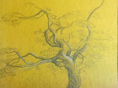 Paula Kane | Tree After Palmer