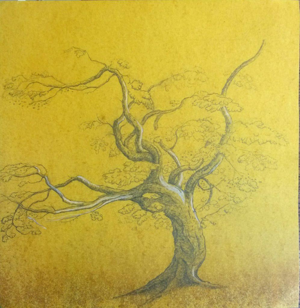 Paula Kane   Tree After Palmer
