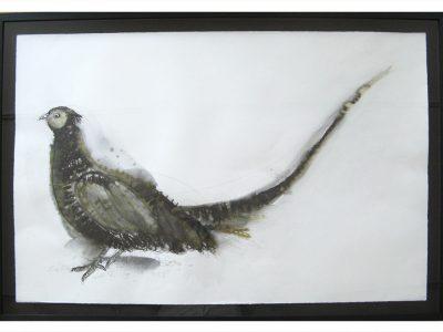 Stuart MacKenzie | Pheasant