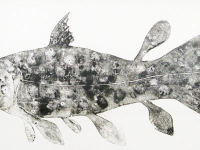 Stuart MacKenzie | Species (coelacanth)