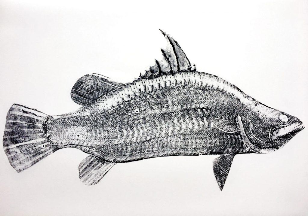 Stuart MacKenzie   Species - Barramundi