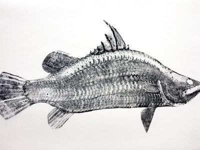 Stuart MacKenzie | Species – Barramundi