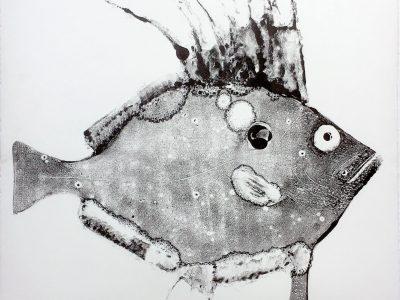 Stuart MacKenzie | Species – John Dory