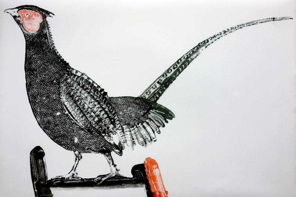Stuart MacKenzie   Species - Pheasant