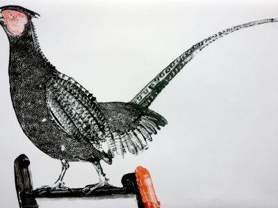 Stuart MacKenzie | Species – Pheasant