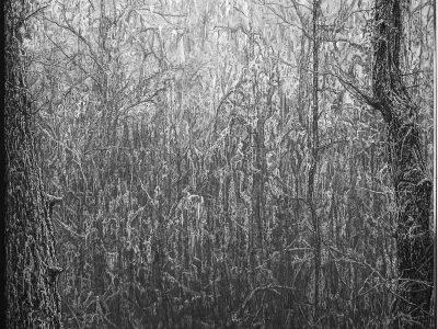 Stephen Walter | Rewilding #1