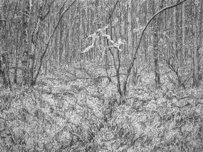 Stephen Walter | Woodland Manifold