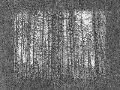 Stephen Walter   Gnarly Wood