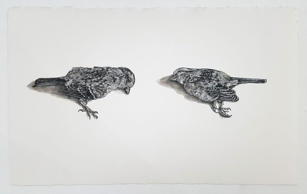 Olivia Kemp | Sidewalk Sparrows
