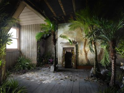 Inhabitation | Palms