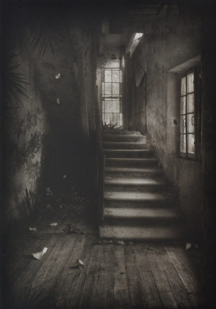 Suzanne Moxhay | Stairway with Vegetation