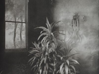 Suzanne Moxhay | Vegetation Under Window