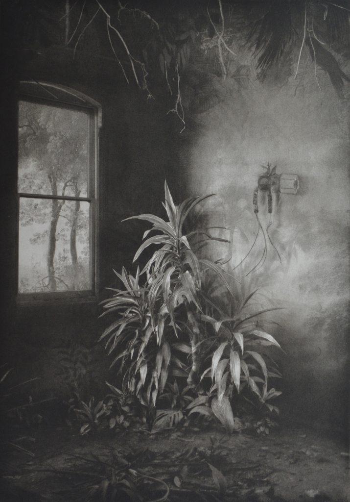 Suzanne Moxhay   'Vegetation Under Window